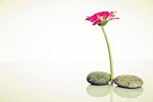 El termino 'Zen' significa conciencia y el control de la misma ayuda a encontrar la paz interior. / Foto: raumrot.