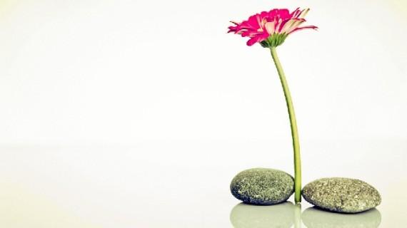 Filosofía Zen: optimismo, conciencia y equilibrio