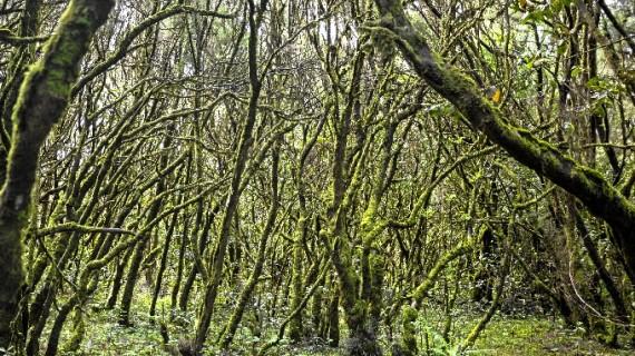 La gestión de los bosques aragoneses se somete a examen por primera vez