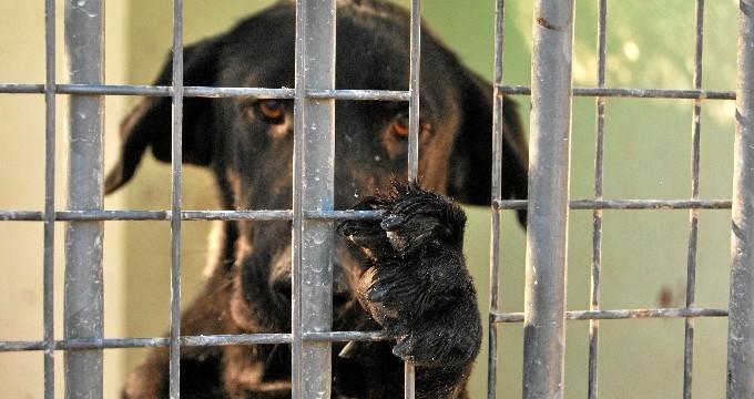 Animales: un regalo sin ticket de devolución