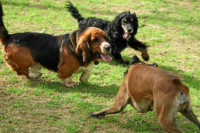 Zaragoza cuenta ya con cuatro zonas que permiten la suelta de perros las 24 horas