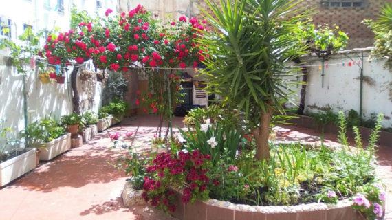 Apadrina un Jardín en Daroca