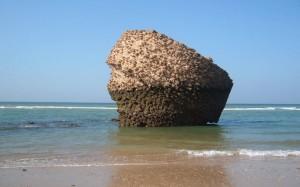 La playa de Matalascañas, en pleno Parque de Doñana, ofrece accesibilidad total a los bañistas y una amplia programación de ocio estival
