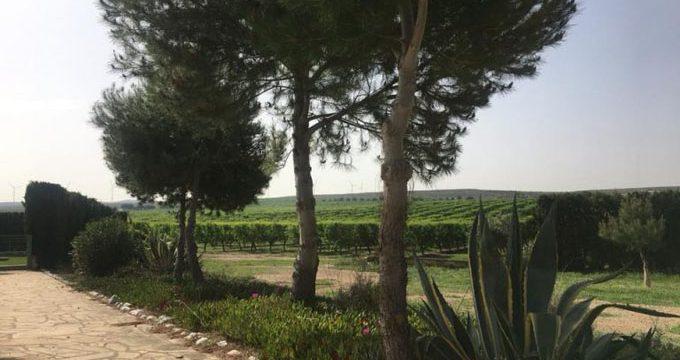 Olivaria, un paraíso ecológico de olivos y almendros