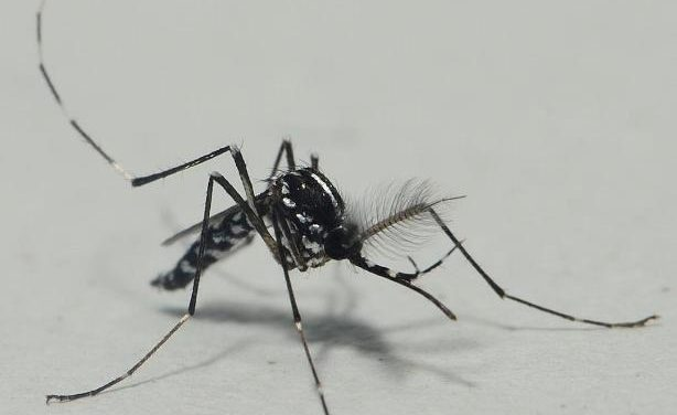 Nueve municipios de Zaragoza en el Plan contra el mosquito tigre