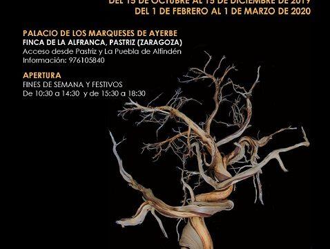 'Los árboles nos cuentan su vida' a través de la muestra 'Arbóreo', en el Espacio Alfranca