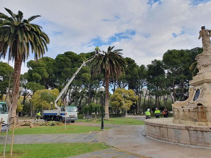 Técnicos aplican un tratamiento a las palmeras afectadas por picudo rojo en el Parque Grande de Zaragoza.