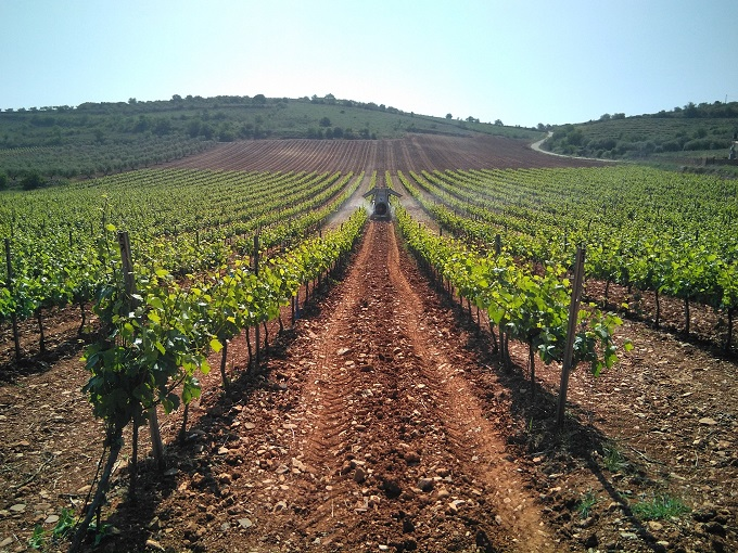 Grapevine aplica inteligencia artificial para predecir plagas en viñedos.