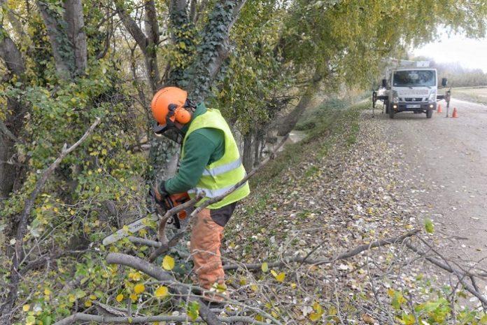 Sanean 600 árboles de las riberas en Zaragoza