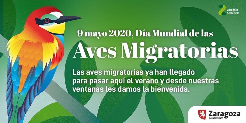 Zaragoza celebra el Día Mundial de las Aves Migratorias