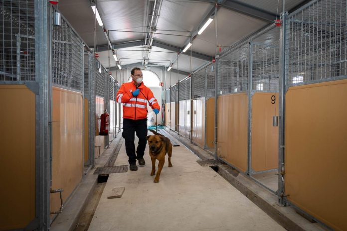 El centro de protección animal de La Cartuja reanuda las adopciones