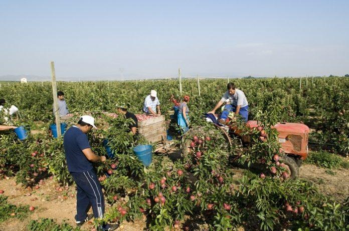 Cae el número de parados en el sector agrícola zaragozano en agosto