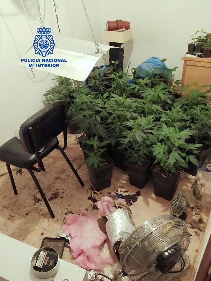 Detenido un hombre al ser sorprendido con una plantación de marihuana