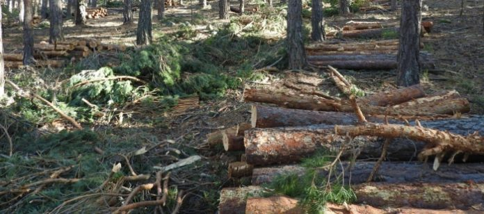 Aragón subasta 12 aprovechamientos de madera en montes aragoneses
